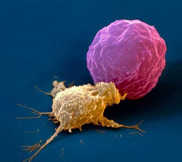 iPS –клетки