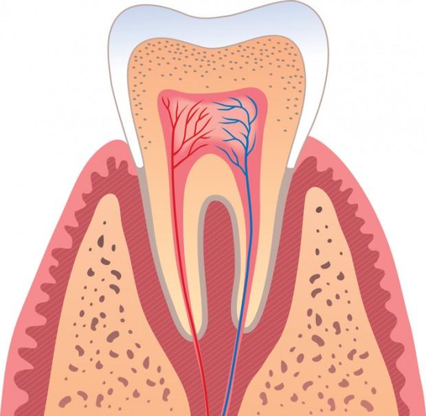 Цемент (Зуба)