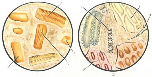 определить паразитов в печени человека