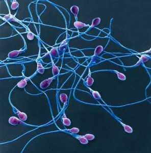 Сперматозоидов а также способствует их агглютинации то есть склеиванию в результате