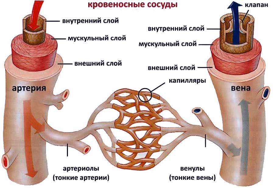 При варикозе болят ноги что делать