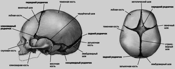Швы на черепе