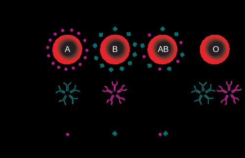 Гемотрансфузия, или переливание крови