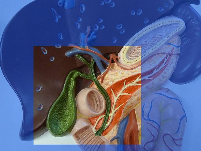Как лечат дискинезию желчного пузыря и протоков