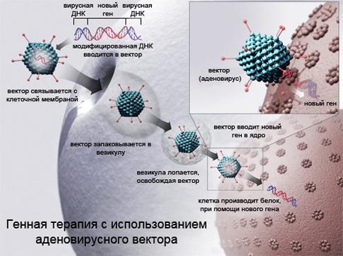 Генная терапия и вирусы
