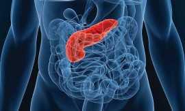 Рак поджелудочной железы – симптомы, причины возникновения, стадии и диагностика
