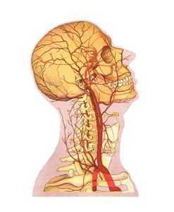 Причины и последствия гипоплазии правой и левой позвоночных артерий