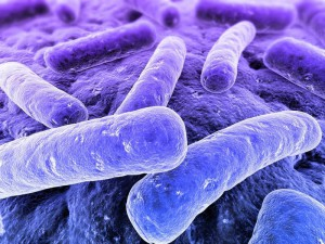 Бактерии сепсиса