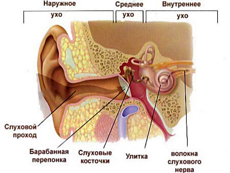 Шум, звон, щелкает в ушах и резкое снижение слуха - все причины