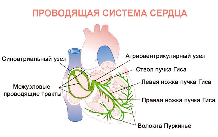 Формы и виды блокады сердца у детей