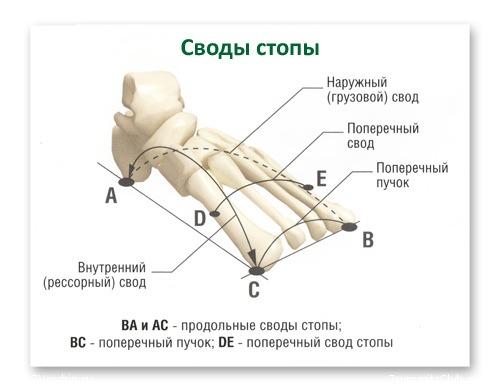 Плоскостопие - виды и стадии